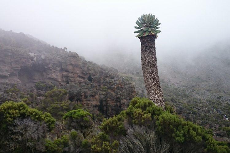 7 Days Lemosho Route