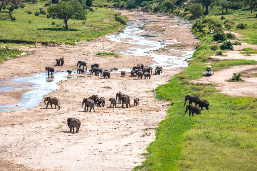 4Days Tanzania Camping Safari